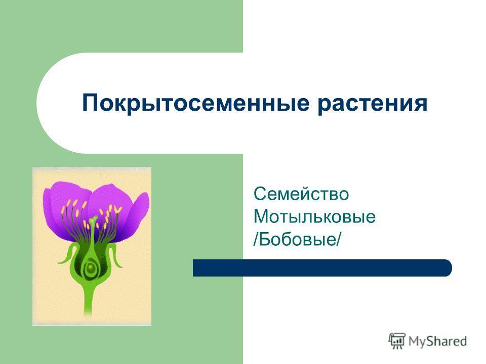 Покрытосеменные растения Семейство Мотыльковые /Бобовые/