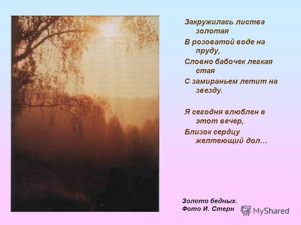 Закружилась листва золотая В розоватой воде на пруду, Словно бабочек легкая стая С замираньем летит на звезду. Я сегодня влюблен в этот вечер, Близок сердцу желтеющий дол… Золото бедных. Фото И. Стерн