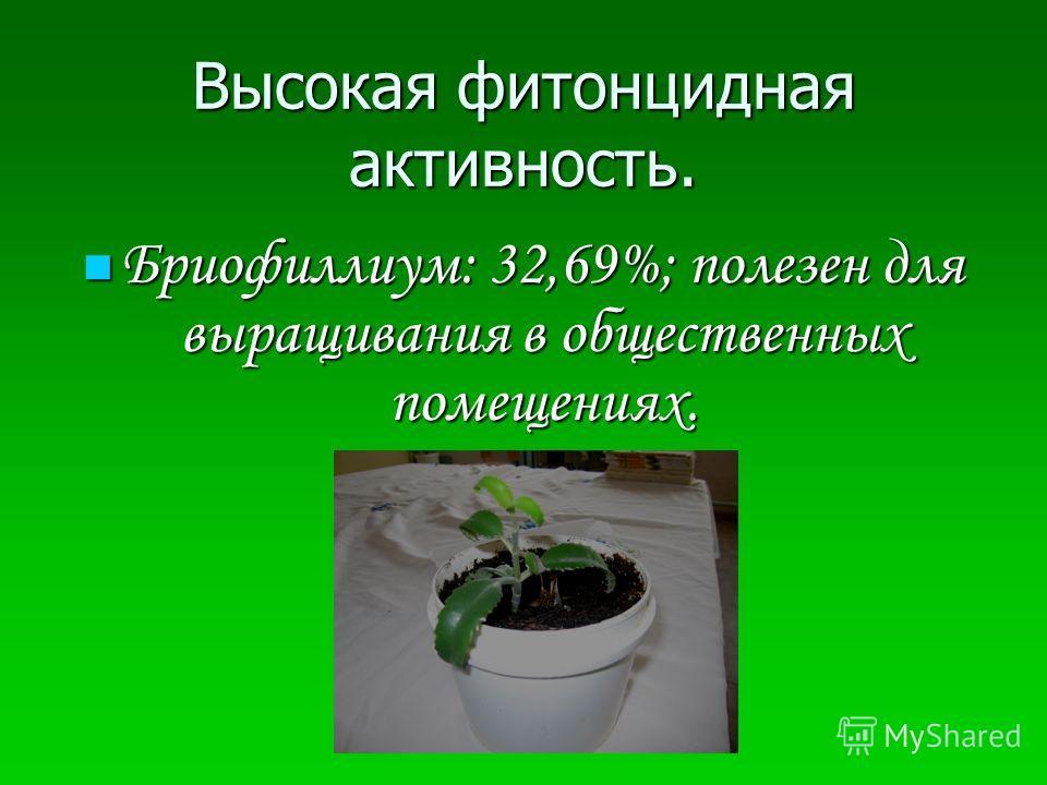 Высокая фитонцидная активность. Бриофиллиум: 32,69%; полезен для выращивания в общественных помещениях. Бриофиллиум: 32,69%; полезен для выращивания в общественных помещениях.