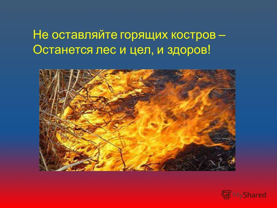 Не оставляйте горящих костров – Останется лес и цел, и здоров!
