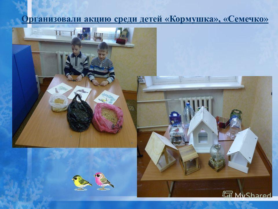 Организовали акцию среди детей «Кормушка», «Семечко»