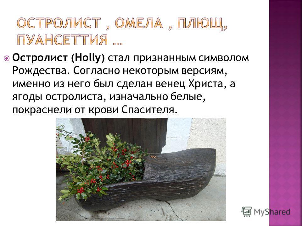 Остролист (Holly) стал признанным символом Рождества. Согласно некоторым версиям, именно из него был сделан венец Христа, а ягоды остролиста, изначально белые, покраснели от крови Спасителя.