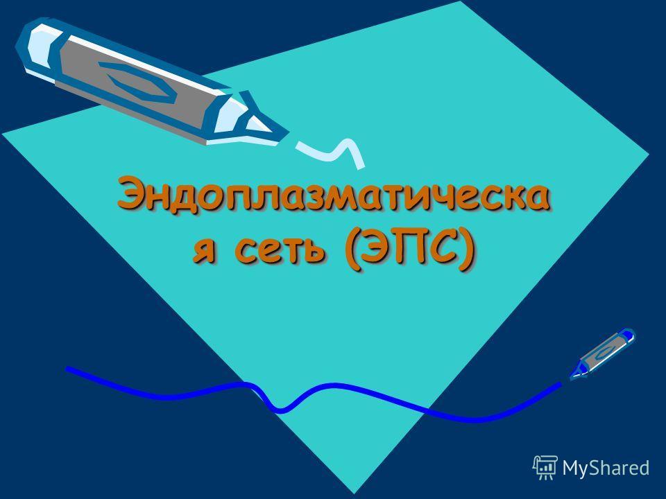 Эндоплазматическа я сеть (ЭПС)