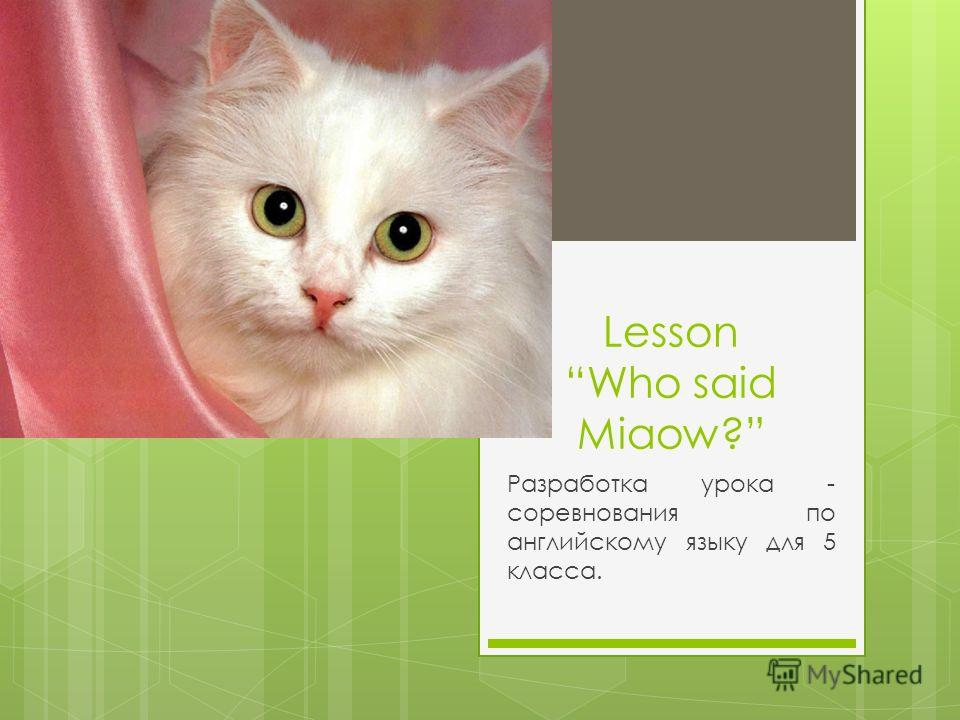 Lesson Who said Miaow? Разработка урока - соревнования по английскому языку для 5 класса.