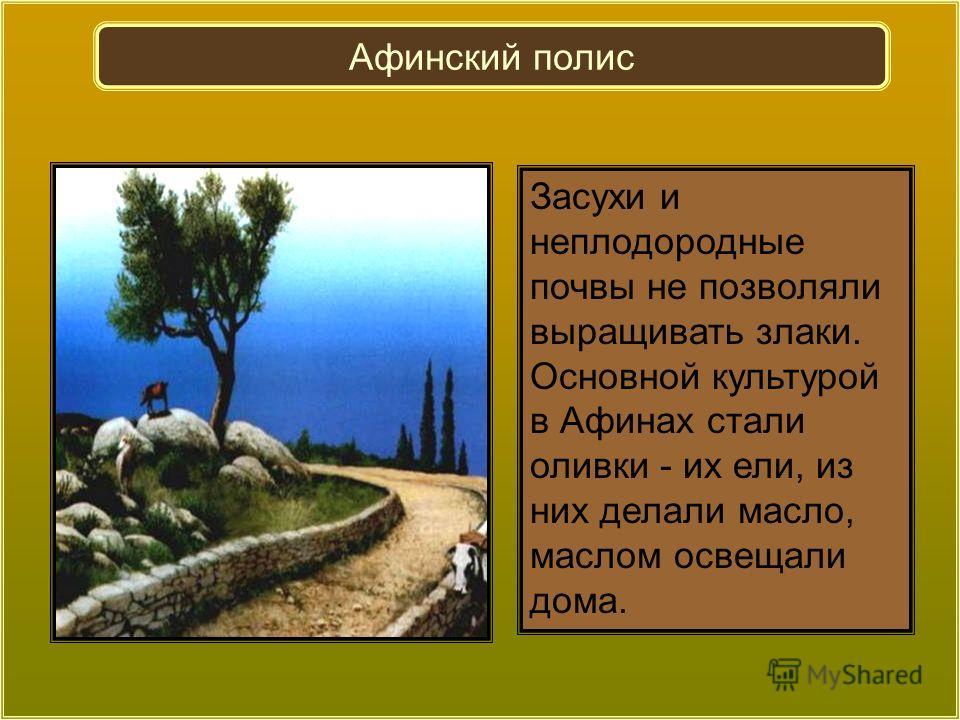Засухи и неплодородные почвы не позволяли выращивать злаки. Основной культурой в Афинах стали оливки - их ели, из них делали масло, маслом освещали дома. Афинский полис