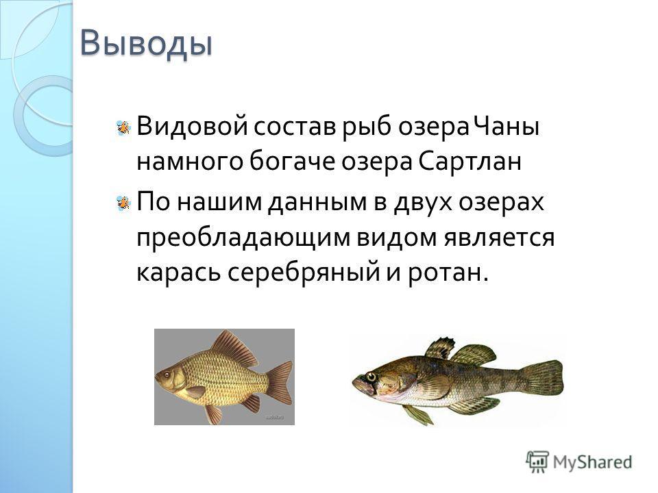 Выводы Видовой состав рыб озера Чаны намного богаче озера Сартлан По нашим данным в двух озерах преобладающим видом является карась серебряный и ротан.