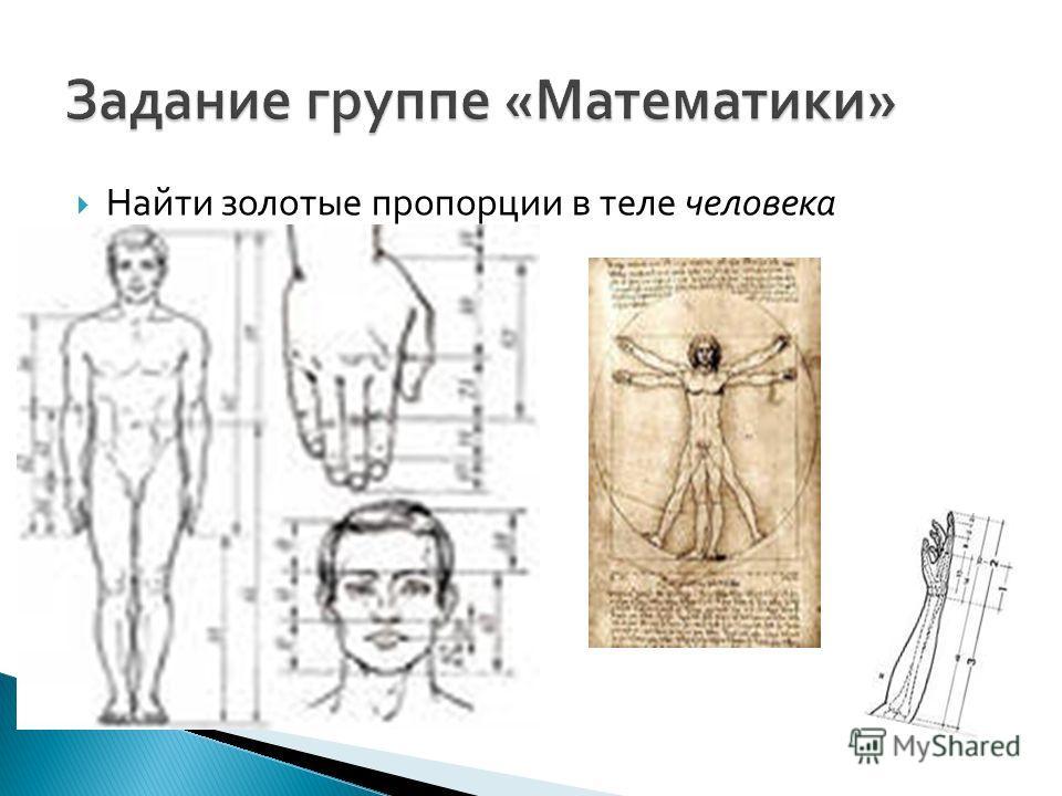 Найти золотые пропорции в теле человека