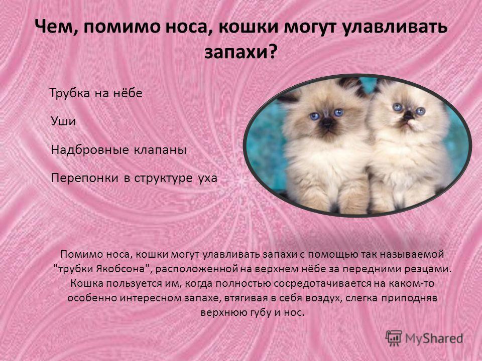 Чем, помимо носа, кошки могут улавливать запахи? Трубка на нёбе Уши Надбровные клапаны Перепонки в структуре уха Помимо носа, кошки могут улавливать запахи с помощью так называемой