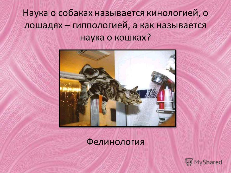 Наука о собаках называется кинологией, о лошадях – гиппологией, а как называется наука о кошках? Фелинология