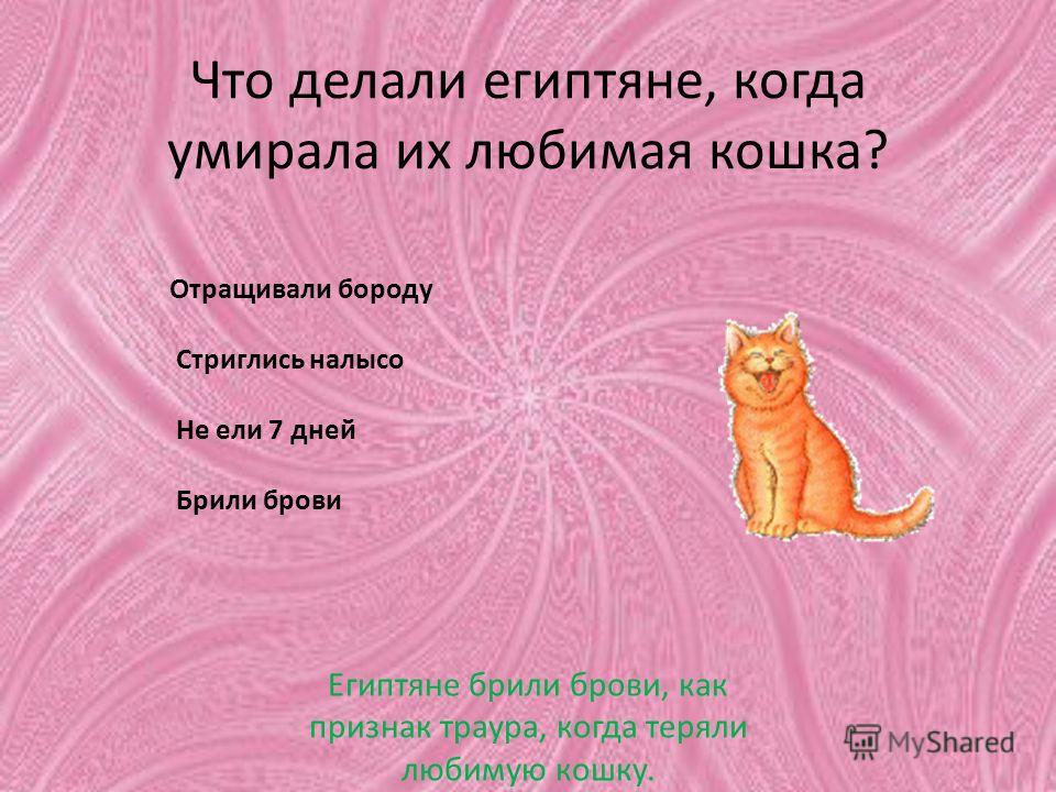Что делали египтяне, когда умирала их любимая кошка? Отращивали бороду Стриглись налысо Не ели 7 дней Брили брови Египтяне брили брови, как признак траура, когда теряли любимую кошку.