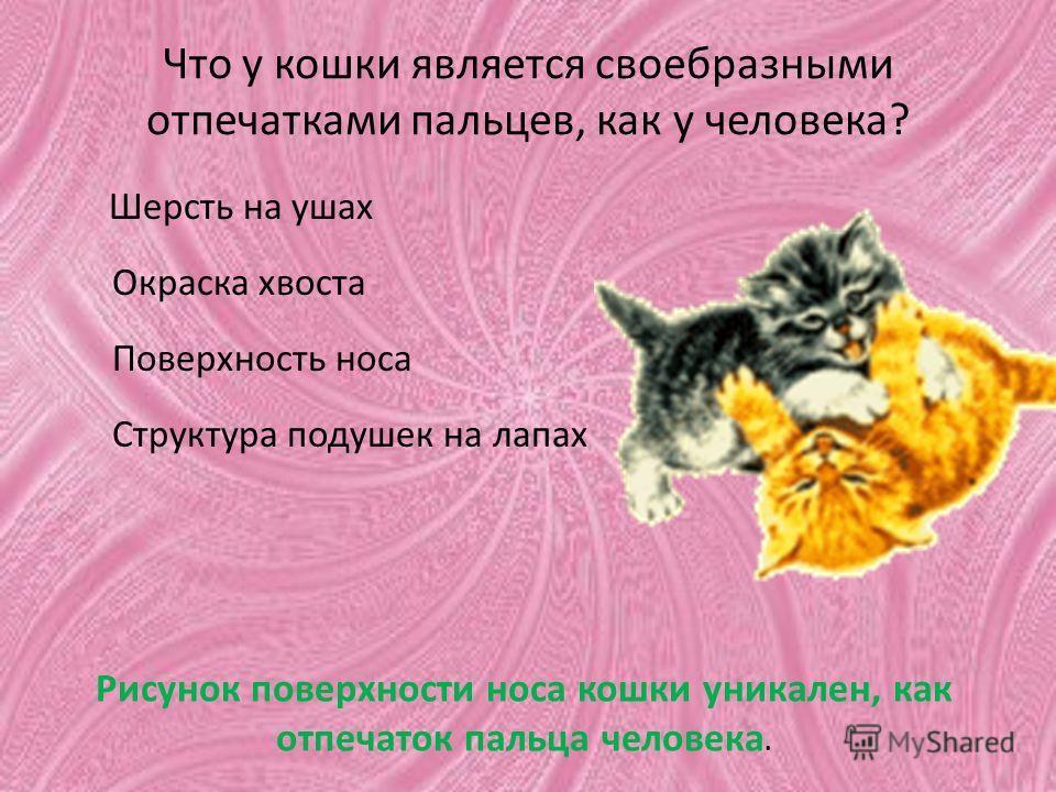 Что у кошки является своебразными отпечатками пальцев, как у человека? Шерсть на ушах Окраска хвоста Поверхность носа Структура подушек на лапах Рисунок поверхности носа кошки уникален, как отпечаток пальца человека.