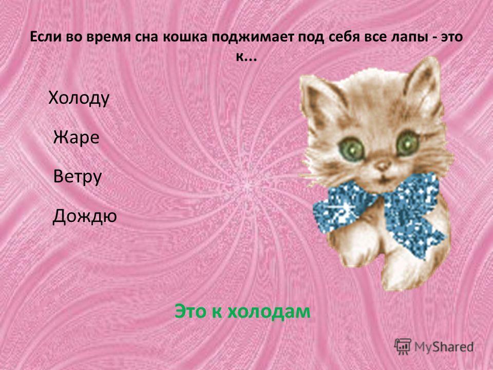 Если во время сна кошка поджимает под себя все лапы - это к... Холоду Жаре Ветру Дождю Это к холодам