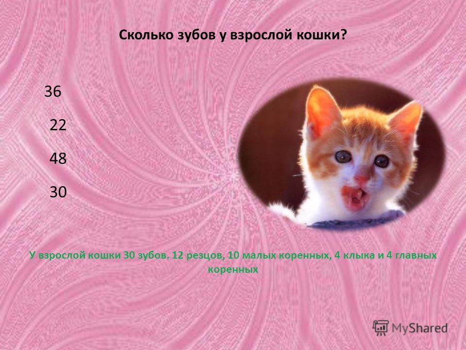 Сколько зубов у взрослой кошки? 36 22 48 30 У взрослой кошки 30 зубов. 12 резцов, 10 малых коренных, 4 клыка и 4 главных коренных