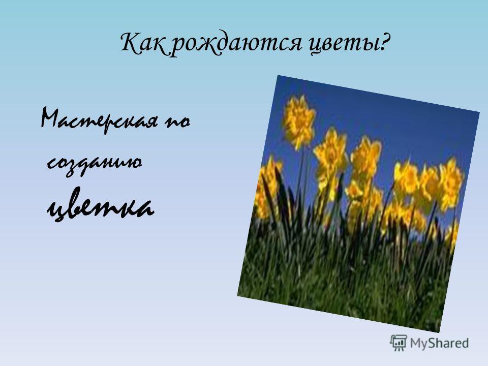 Как рождаются цветы? Мастерская по созданию цветка