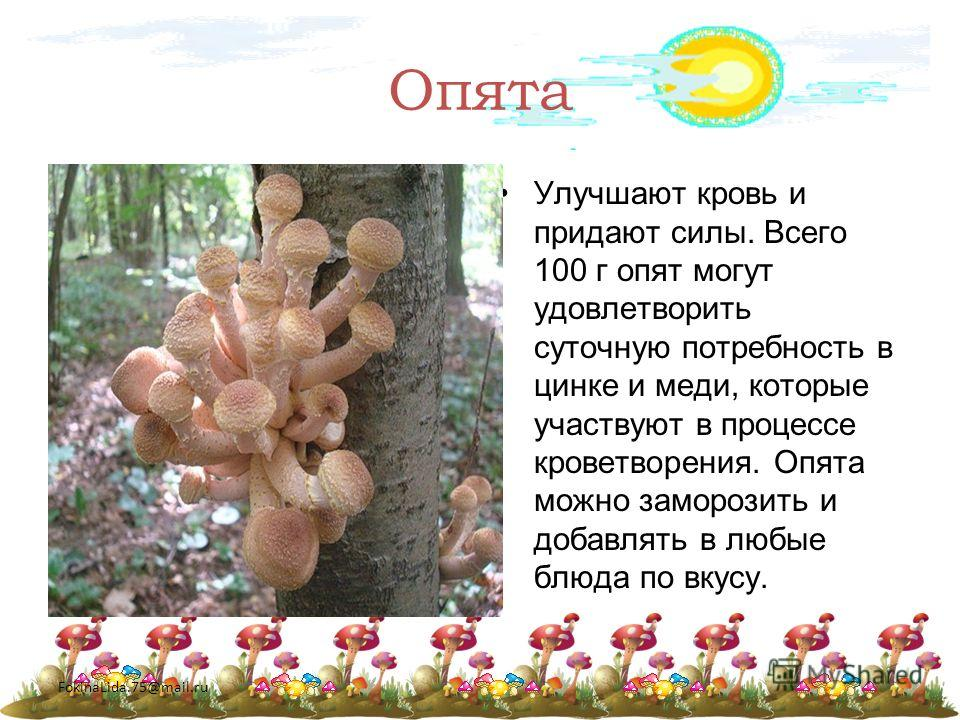 FokinaLida.75@mail.ru Опята Улучшают кровь и придают силы. Всего 100 г опят могут удовлетворить суточную потребность в цинке и меди, которые участвуют в процессе кроветворения. Опята можно заморозить и добавлять в любые блюда по вкусу.