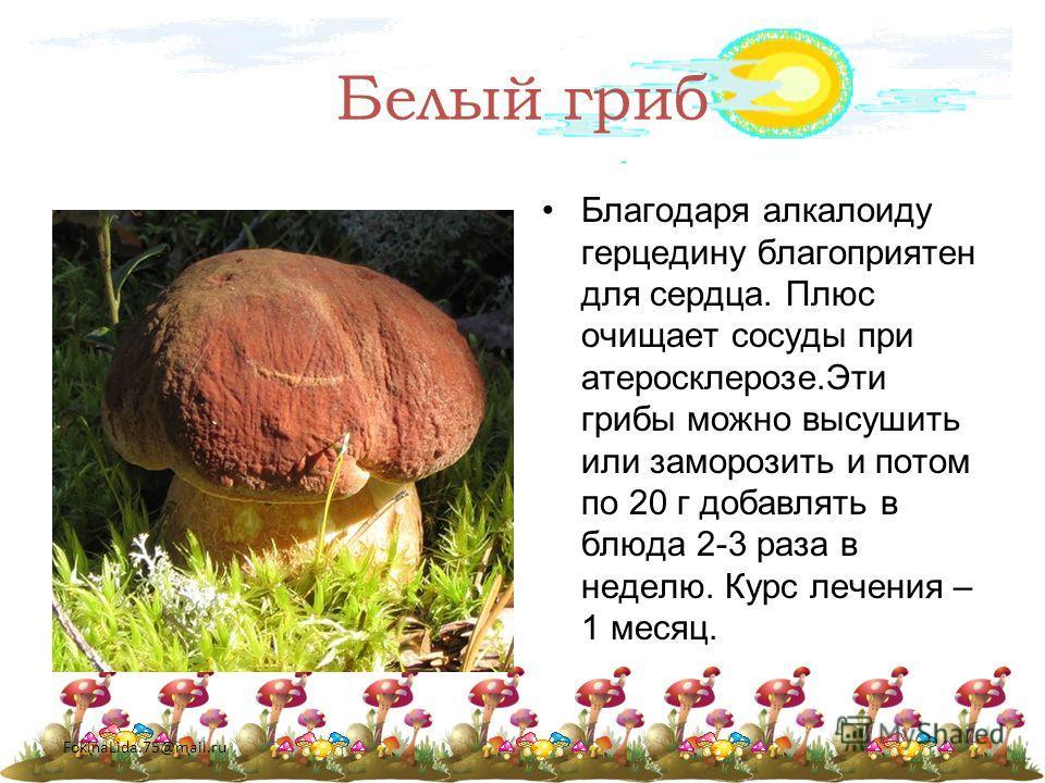 FokinaLida.75@mail.ru Белый гриб Благодаря алкалоиду герцедину благоприятен для сердца. Плюс очищает сосуды при атеросклерозе.Эти грибы можно высушить или заморозить и потом по 20 г добавлять в блюда 2-3 раза в неделю. Курс лечения – 1 месяц.