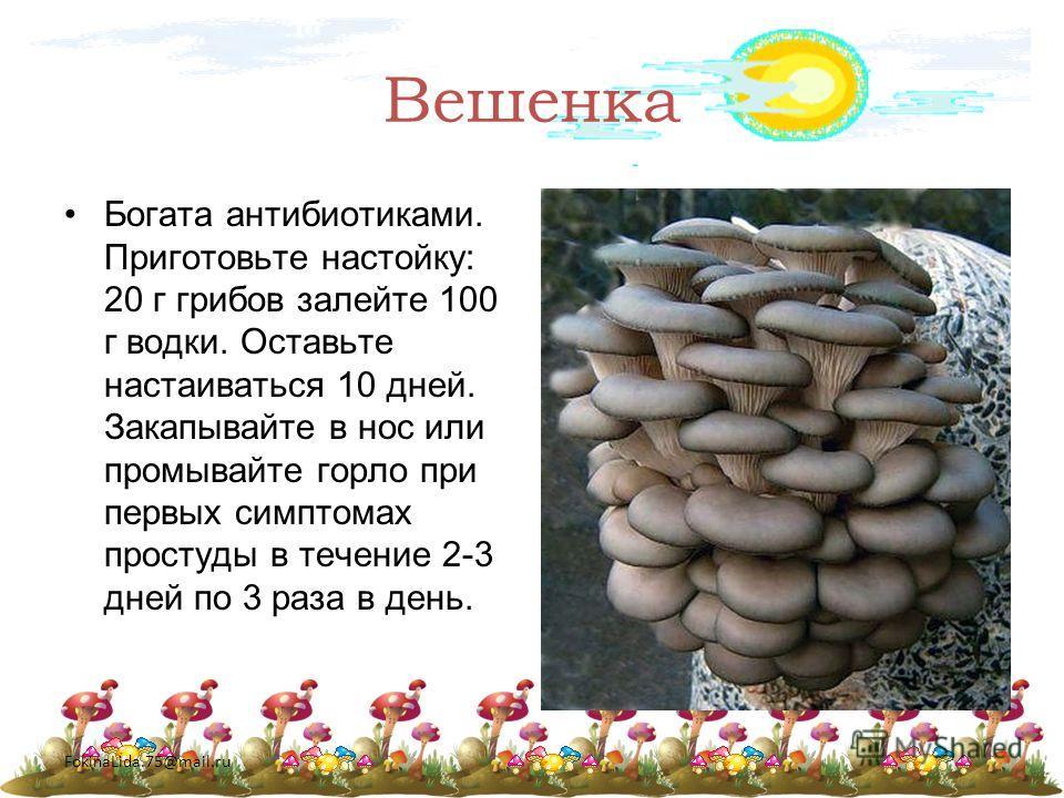 FokinaLida.75@mail.ru Вешенка Богата антибиотиками. Приготовьте настойку: 20 г грибов залейте 100 г водки. Оставьте настаиваться 10 дней. Закапывайте в нос или промывайте горло при первых симптомах простуды в течение 2-3 дней по 3 раза в день.