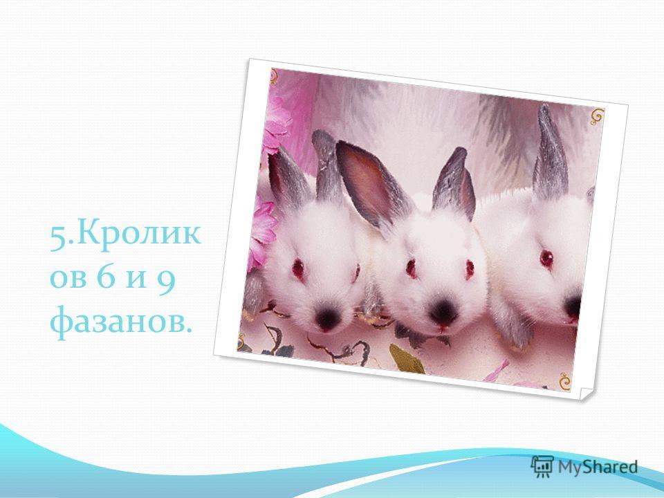 5.Кролик ов 6 и 9 фазанов.