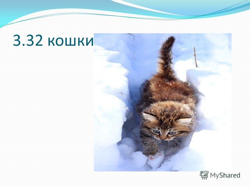 3.32 кошки
