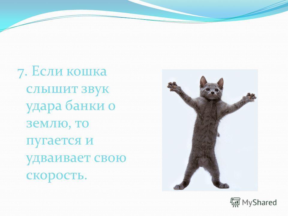 7. Если кошка слышит звук удара банки о землю, то пугается и удваивает свою скорость.