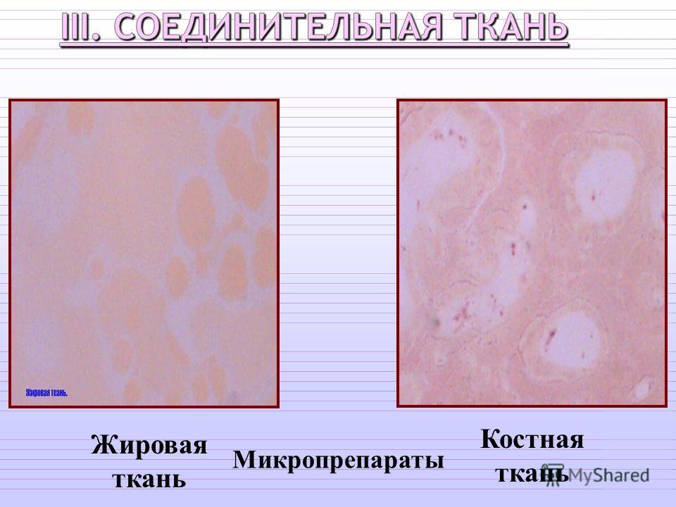 Жировая ткань Костная ткань Микропрепараты