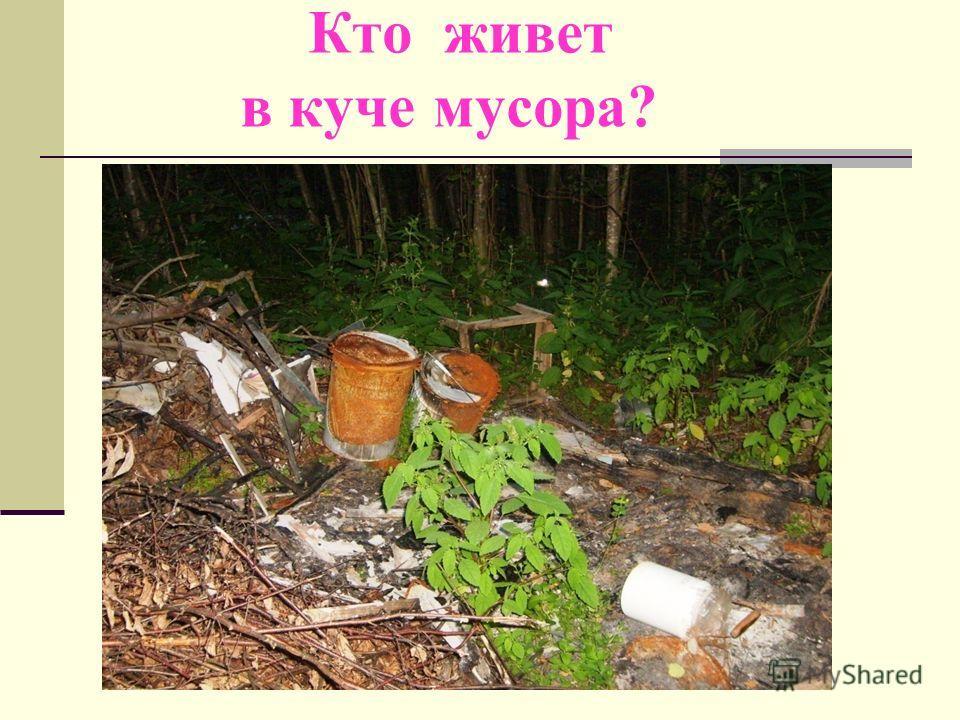 Кто живет в куче мусора?