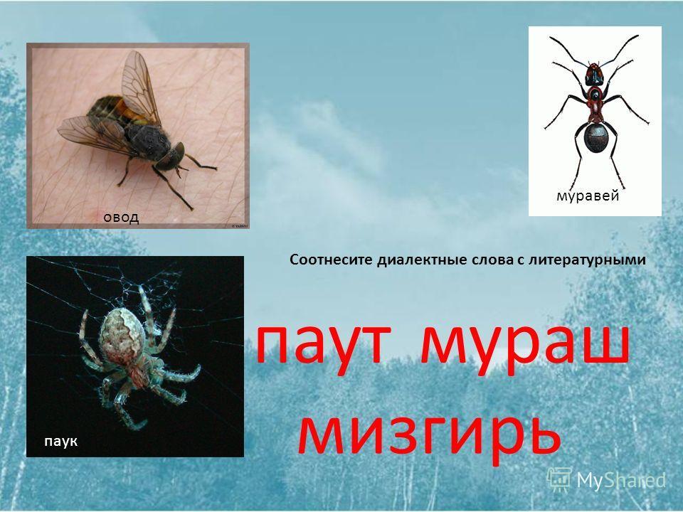 овод паук муравей Соотнесите диалектные слова с литературными паутмураш мизгирь