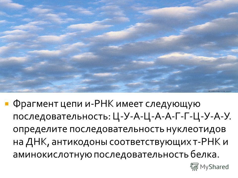Фрагмент цепи и-РНК имеет следующую последовательность: Ц-У-А-Ц-А-А-Г-Г-Ц-У-А-У. определите последовательность нуклеотидов на ДНК, антикодоны соответствующих т-РНК и аминокислотную последовательность белка.