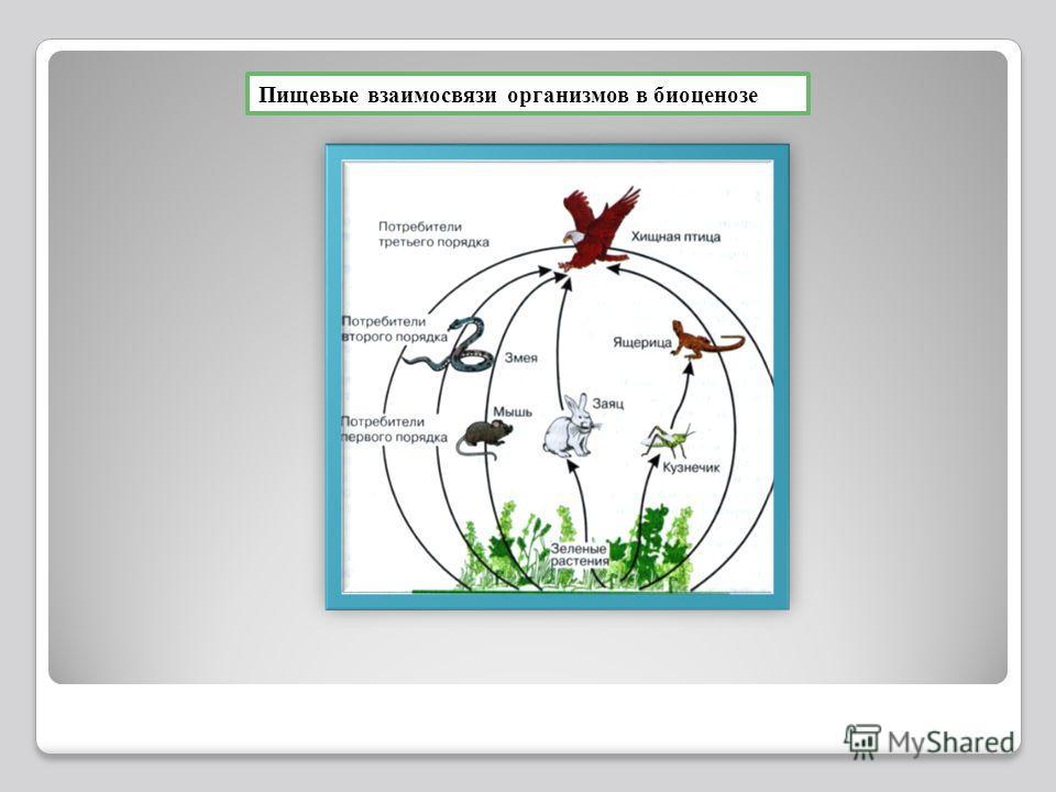 Пищевые взаимосвязи организмов в биоценозе