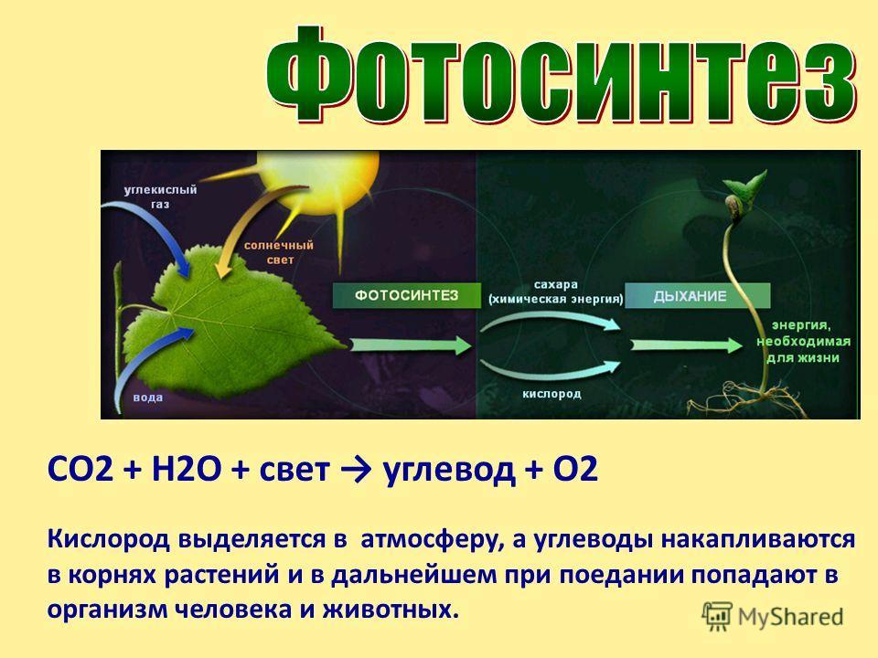 Фотосинтез Фото- с греческого «свет» Синтез – с греческого «соединение» Фотосинтез – это процесс, от которого зависит вся жизнь на Земле. Он происходит только в растениях. В ходе фотосинтеза растение вырабатывает из неорганических веществ необходимые