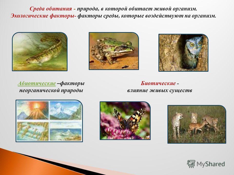 Среда обитания - природа, в которой обитает живой организм. Экологические факторы- факторы среды, которые воздействуют на организм. АбиотическиеАбиотические –факторы неорганической природы Биотические - влияние живых существ