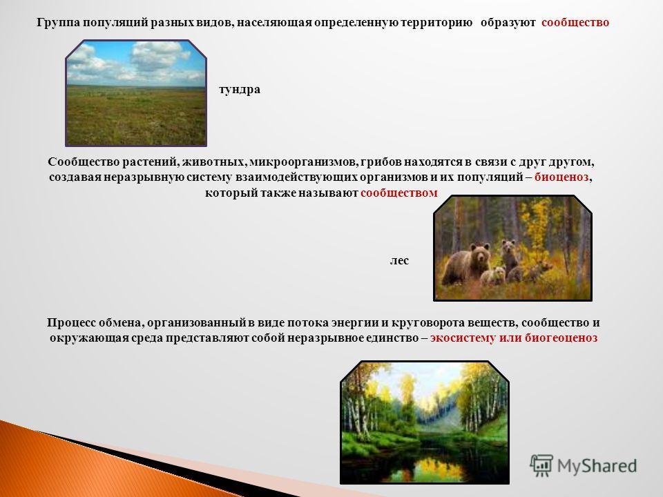Группа популяций разных видов, населяющая определенную территорию образуют сообщество тундра Сообщество растений, животных, микроорганизмов, грибов находятся в связи с друг другом, создавая неразрывную систему взаимодействующих организмов и их популя