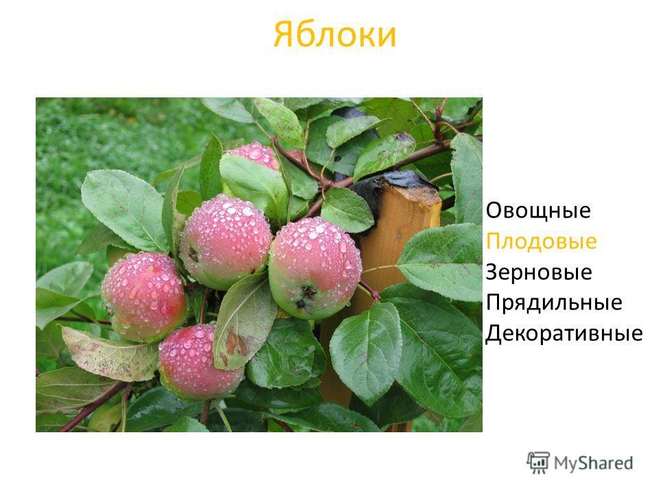 Яблоки Овощные Плодовые Зерновые Прядильные Декоративные