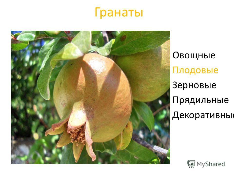Гранаты Овощные Плодовые Зерновые Прядильные Декоративные