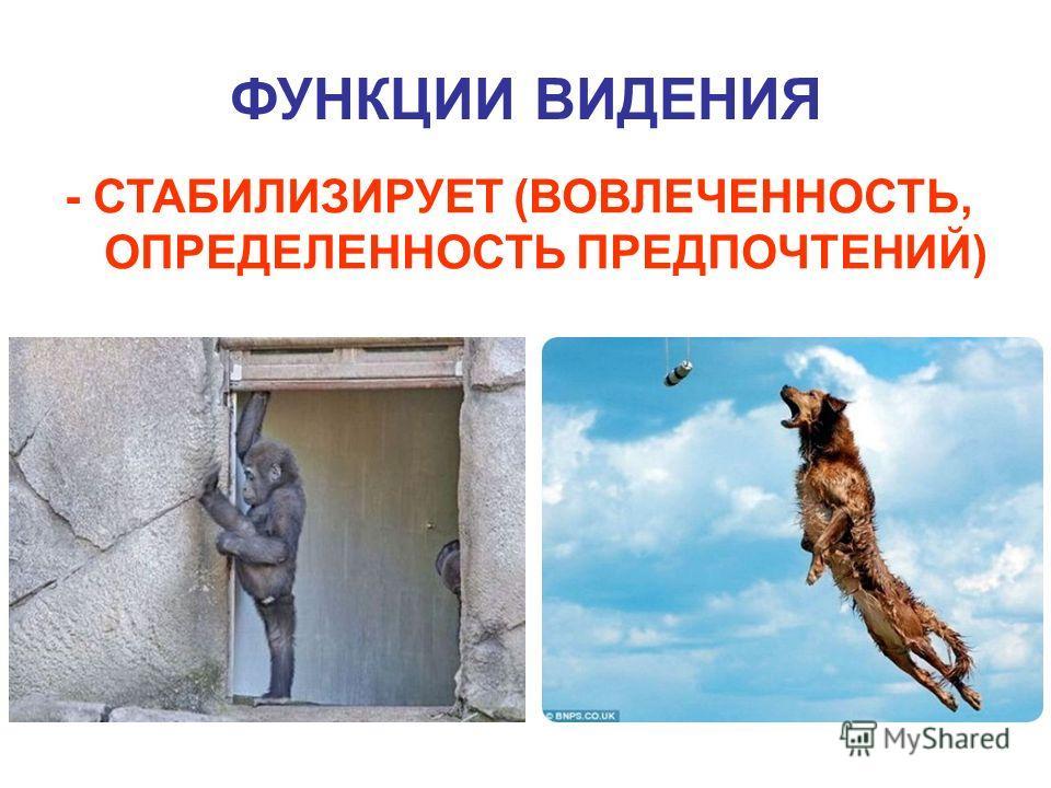 ФУНКЦИИ ВИДЕНИЯ - СТАБИЛИЗИРУЕТ (ВОВЛЕЧЕННОСТЬ, ОПРЕДЕЛЕННОСТЬ ПРЕДПОЧТЕНИЙ)