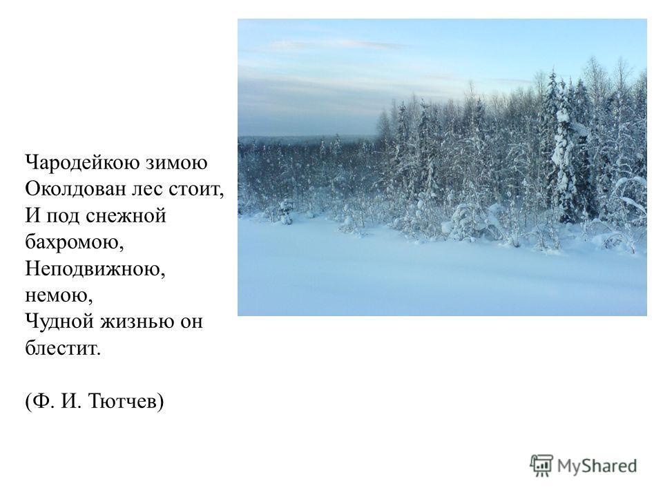 Чародейкою зимою Околдован лес стоит, И под снежной бахромою, Неподвижною, немою, Чудной жизнью он блестит. (Ф. И. Тютчев)