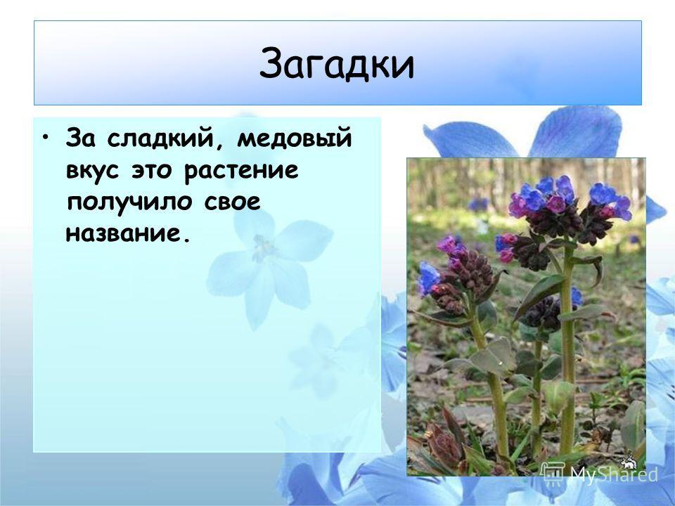 Загадки За сладкий, медовый вкус это растение получило свое название.