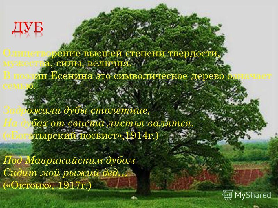 Олицетворение высшей степени твердости, мужества, силы, величия. В поэзии Есенина это символическое дерево означает семью. Задрожали дубы столетние, На дубах от свиста листья валятся. («Богатырский посвист»,1914г.) Под Маврикийским дубом Сидит мой ры