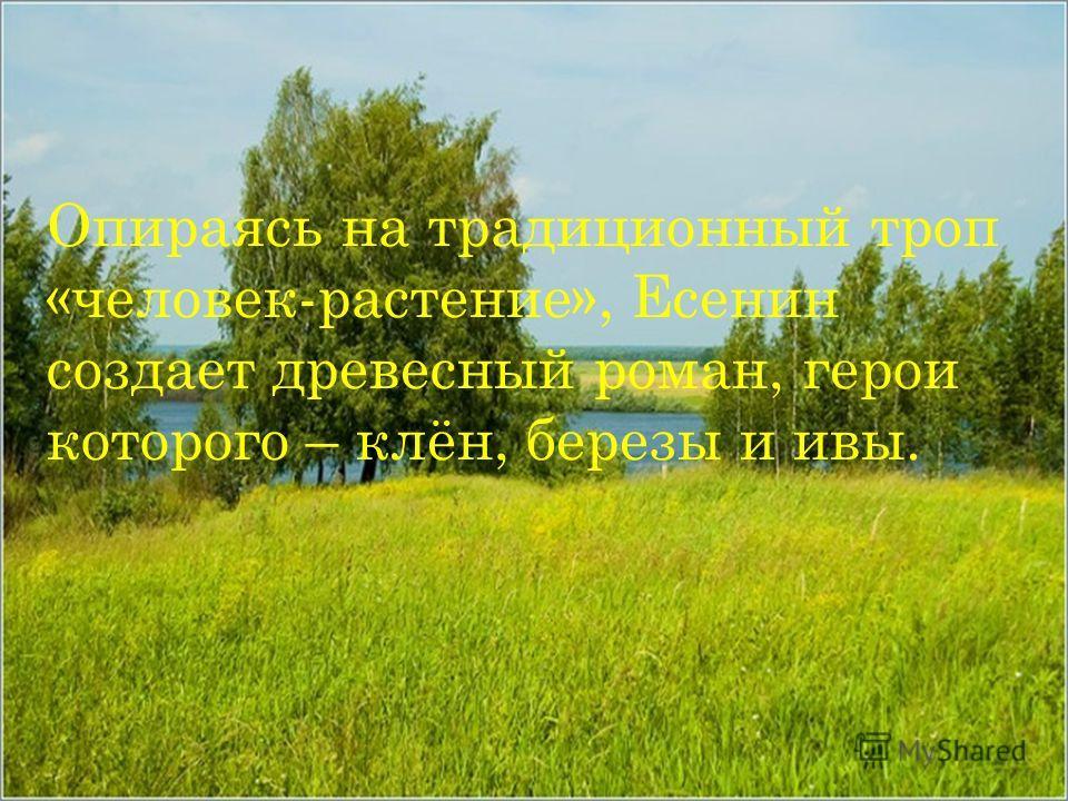 Опираясь на традиционный троп «человек-растение», Есенин создает древесный роман, герои которого – клён, березы и ивы.