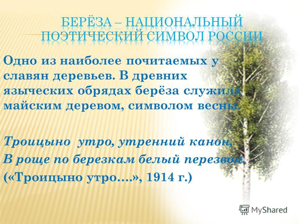 Одно из наиболее почитаемых у славян деревьев. В древних языческих обрядах берёза служила майским деревом, символом весны. Троицыно утро, утренний канон, В роще по березкам белый перезвон. («Троицыно утро….», 1914 г.)