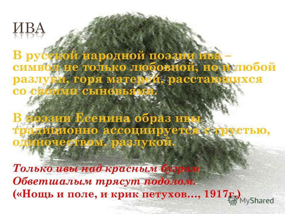 В русской народной поэзии ива – символ не только любовной, но и любой разлуки, горя матерей, расстающихся со своими сыновьями. В поэзии Есенина образ ивы традиционно ассоциируется с грустью, одиночеством, разлукой. Только ивы над красным бугром Обвет