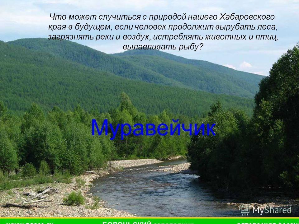 Что может случиться с природой нашего Хабаровского края в будущем, если человек продолжит вырубать леса, загрязнять реки и воздух, истреблять животных и птиц, вылавливать рыбу? Муравейчик