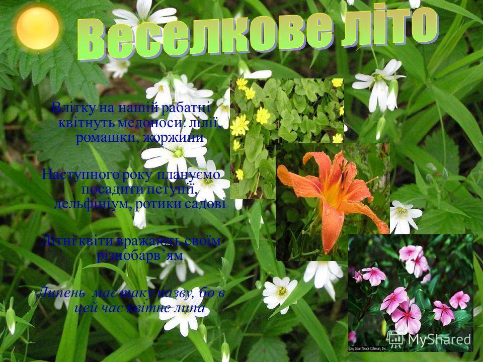 Влітку на нашій рабатці квітнуть медоноси : лілії, ромашки, жоржини Наступного року плануємо посадити петунії, дельфініум, ротики садові Літні квіти вражають своїм різнобарвям Липень має таку назву, бо в цей час квітне липа