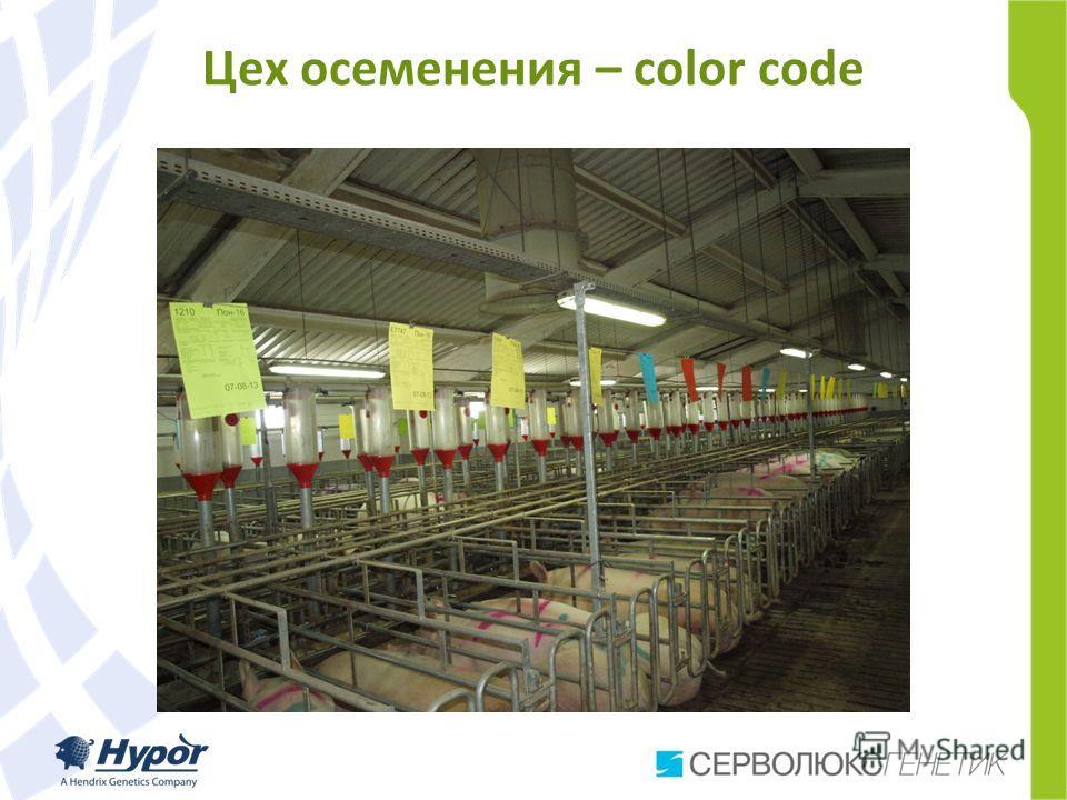 Цех осеменения – color code