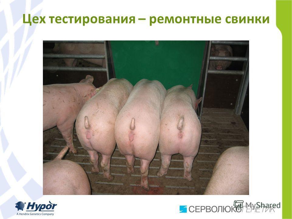 Цех тестирования – ремонтные свинки