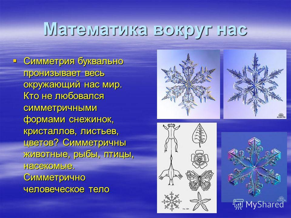Математика вокруг нас Симметрия буквально пронизывает весь окружающий нас мир. Кто не любовался симметричными формами снежинок, кристаллов, листьев, цветов? Симметричны животные, рыбы, птицы, насекомые. Симметрично человеческое тело Симметрия букваль