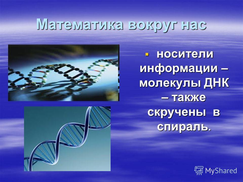 Математика вокруг нас носители информации – молекулы ДНК – также скручены в спираль. носители информации – молекулы ДНК – также скручены в спираль.