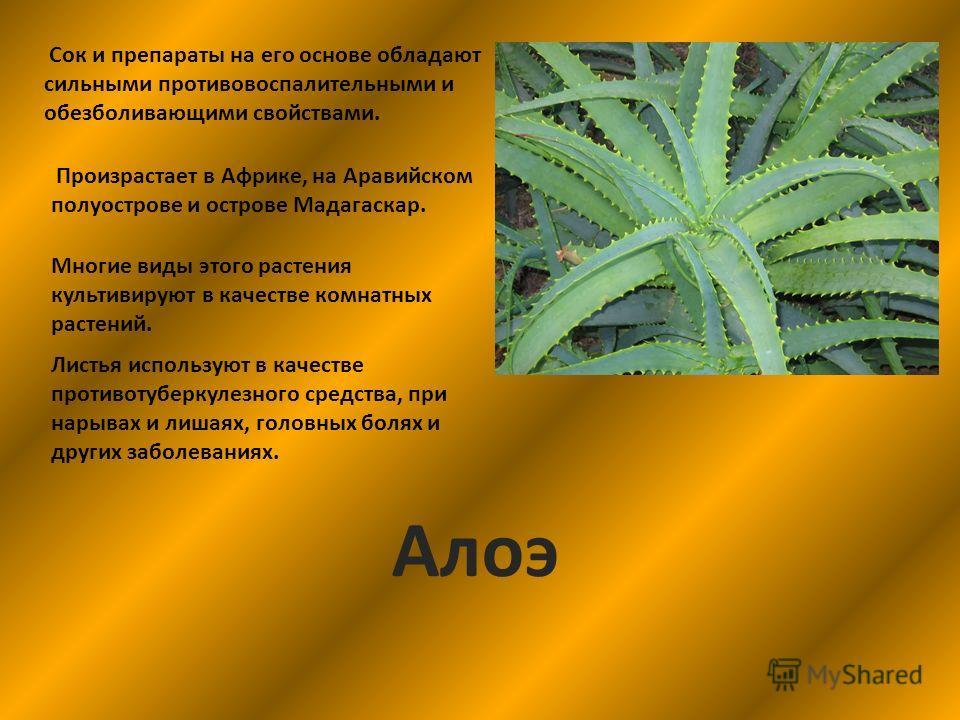 Сок и препараты на его основе обладают сильными противовоспалительными и обезболивающими свойствами. Произрастает в Африке, на Аравийском полуострове и острове Мадагаскар. Многие виды этого растения культивируют в качестве комнатных растений. Листья