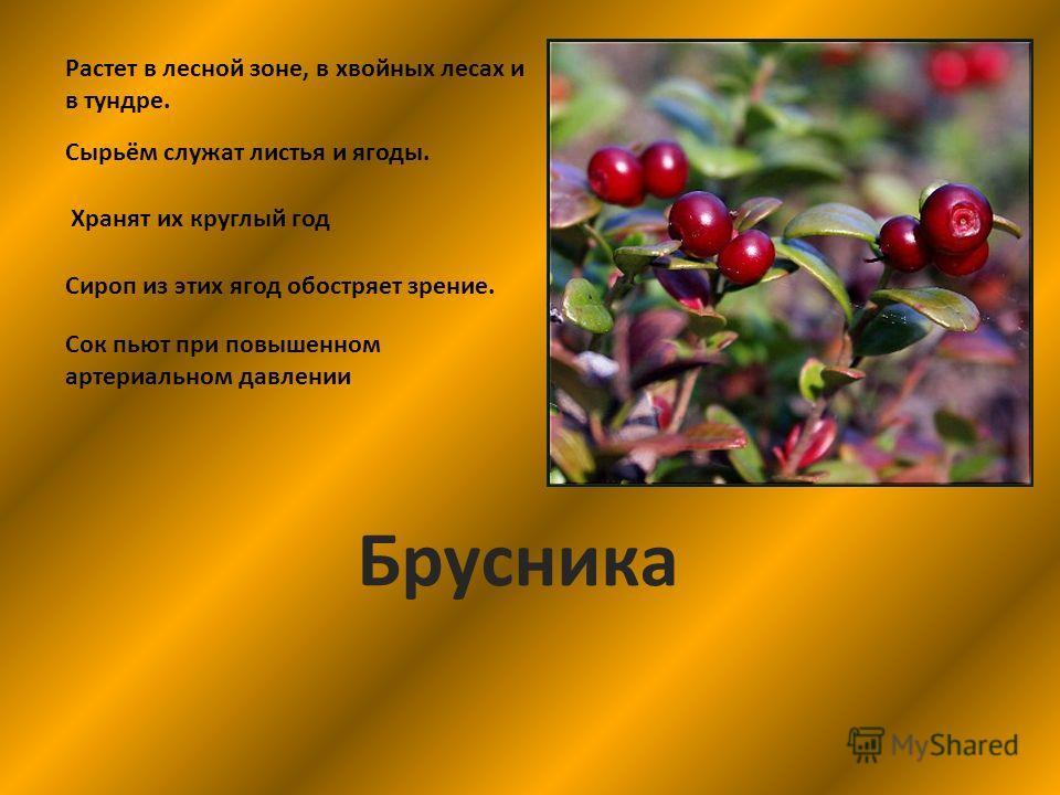 Растет в лесной зоне, в хвойных лесах и в тундре. Сырьём служат листья и ягоды. Хранят их круглый год Брусника Сироп из этих ягод обостряет зрение. Сок пьют при повышенном артериальном давлении