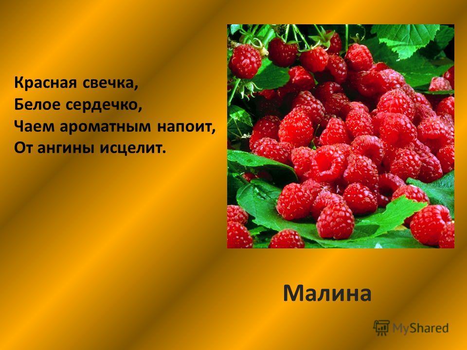 Красная свечка, Белое сердечко, Чаем ароматным напоит, От ангины исцелит. Малина